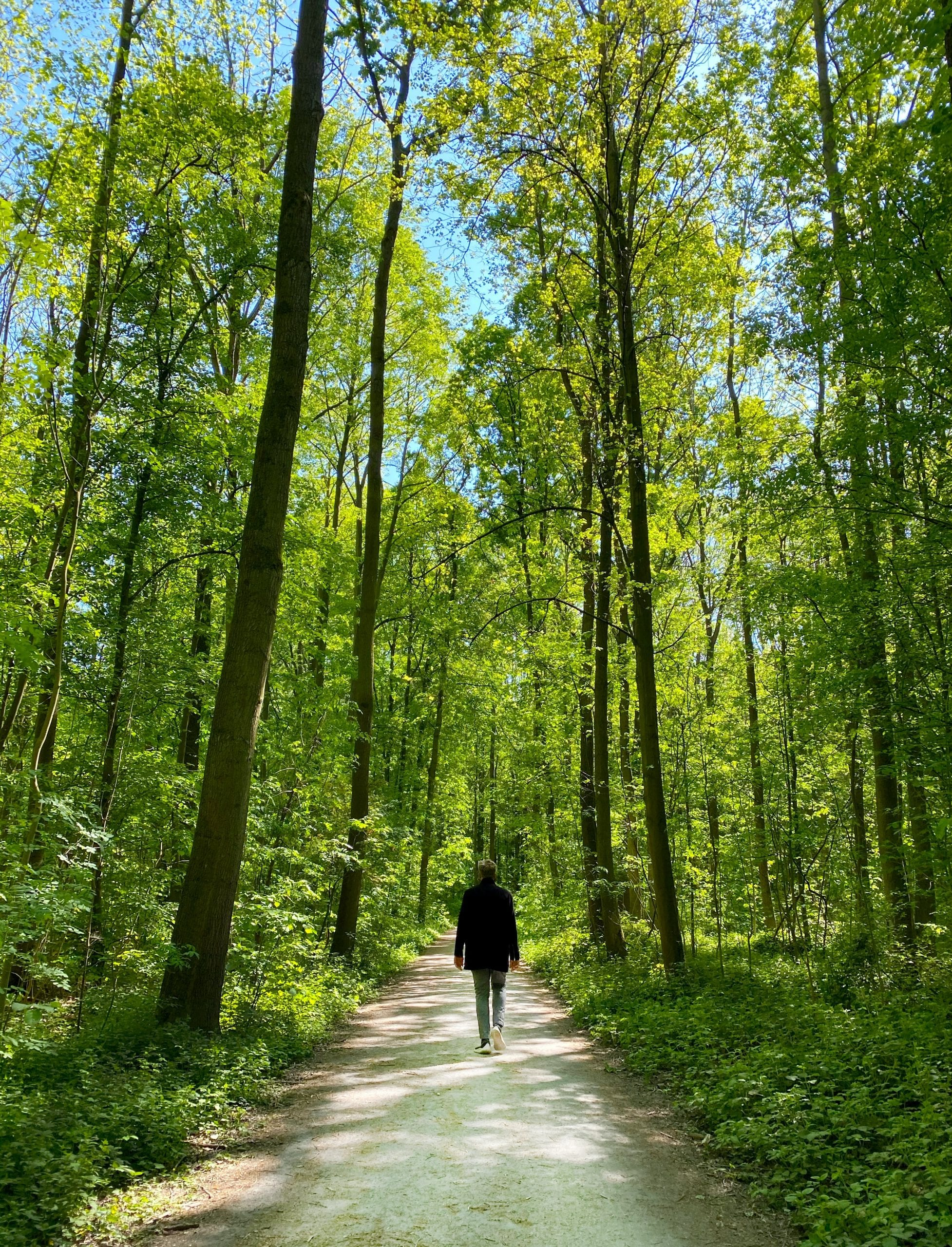 alive-counselling-walk-and-talk-therapy-outside-blue-skies-green-trees-path-scaled.jpg