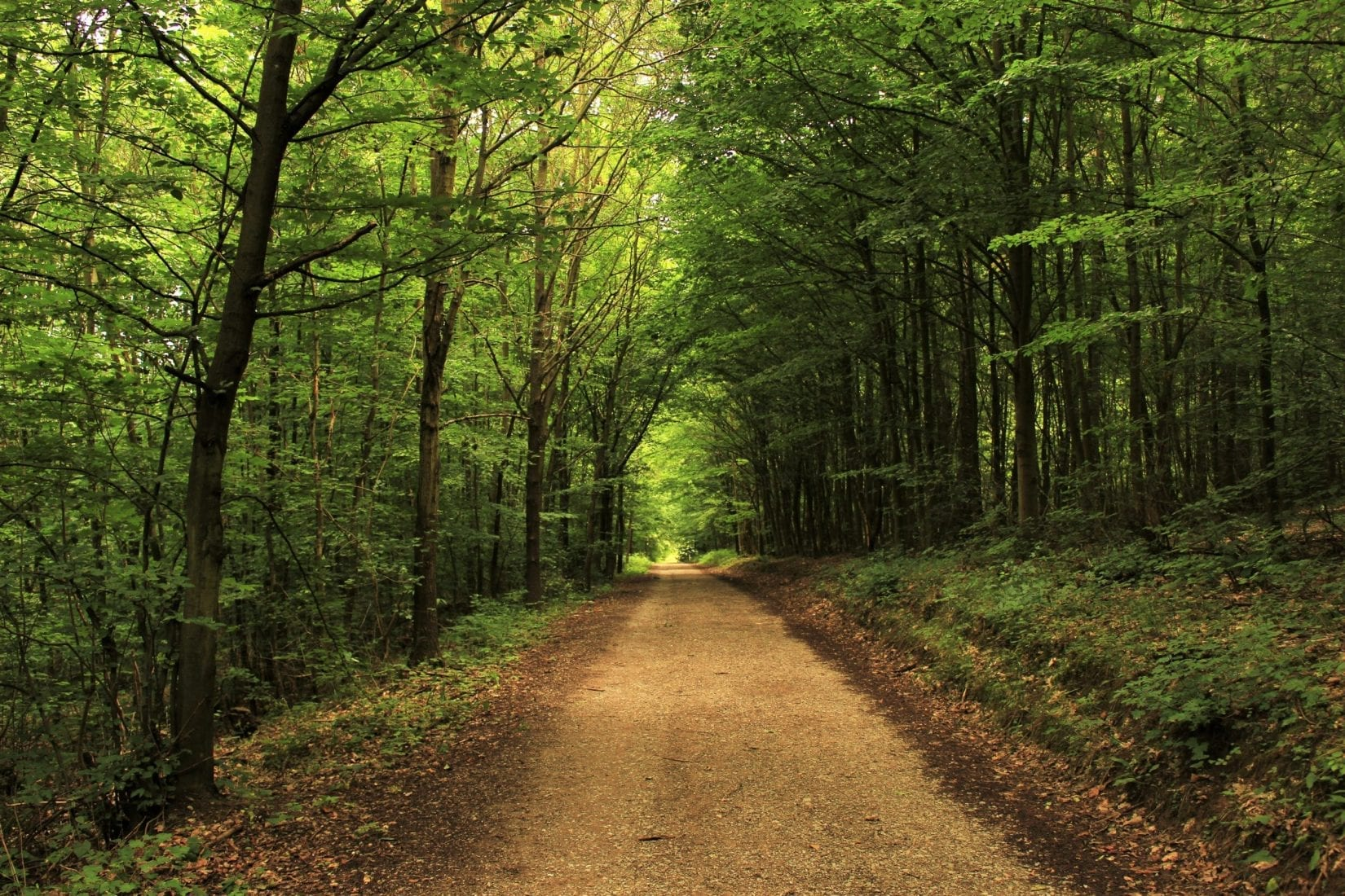 brown-dirt-path-in-green-forest-walk-and-talk-therapy-kelowna-british-columbia-alive-counselling-barb-egan